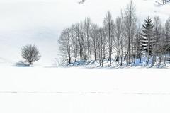 WinterDying.jpg (Klaus Ressmann) Tags: klaus ressmann asemmering austria landscape nikon snow winter design flcnat softtones trees white klausressmann