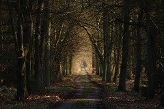 into the light (JoannaRB2009) Tags: forest woods spring nature light shadow tree trees road path lowersilesia dolnyśląsk polska poland dolinabaryczy