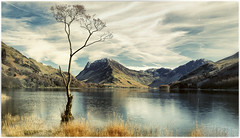 20170325 - Lone Tree Buttermere (RenaldasUK) Tags: canon buttermere tree lakedistrict lake water mountains england uk sky clouds spring canon6d 247028 leelittlestopper 6stops leefilters cumbria colorefex4 lightroom