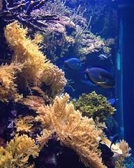 Aquarium (nicolefioravanti) Tags: aquarium ocean fishes coral blue yellow genova acquariodigenova italy