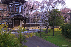 Cherry blossoms in the book 春の日差し春の風 奈良市 仏教美術資料研究センター ((^^)Teraon) Tags: japan nara naracity 奈良 枝垂れ桜 canon eos m2 eosm2 efm1122mmf456isstm 桜 sakura cherry cerejeira cerezo flower bloomed nature flor floresceu 春 spring primavera 奈良公園 unesco 世界遺産 park parque cherryblossom blossom 奈良国立博物館 仏教美術資料研究センター 建築物 building