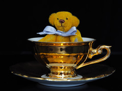Teddy in Teacup (PrunellaCara) Tags: teddy mini teacup stilllife objects blackbackground yellow