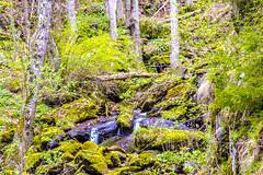 Just a small waterfalls... (Don Costello) Tags: waterfall nature gura apelor retezat landscape water forest nikon d3300 romania hunedoara river rau barbat