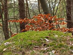 IMG_4577 (germancute) Tags: nature outdoor kanzel plant wildflower flower blume landscape landschaft thuringia thüringen germany germancute wald wiese