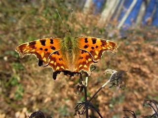 Butterfly 1220