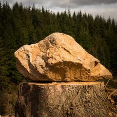highland rock on top of the stump! (grahamrobb888) Tags: nikon nikond800 nikkor50mmf18 polarised polariser filter birnamwood birnam perthshire scotland rock rocks forest trees stump