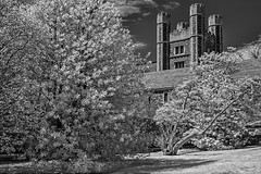 Princeton University Buyers Hall (Susan Candelario) Tags: blackwhite blackandwhite collegiategothic exteriorview infraredimage nj newjersey northamerica princeton princetonuniversity princetonuniversitybuyershall susancandelario us usa unitedstates architectural architecture bw black college dorm dormitory dorms foliage ivyleague landscape landscapes plant plants schoolroom schools shrub towers tree trees university white