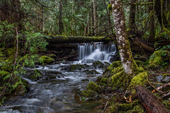 Mary Vine Creek (jsnmckenzie) Tags: maryvinecreek sooke sookebc sookepotholes sookepotholesprovincialpark creek moss trees water waterfall vancouverisland victoriabc victoria britishcolumbia bc canada nikon d7200 18mm105mm 2017 woods landscape rainforest pacificnorthwest longexposure