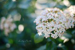 - (-LilyBeth) Tags: nature natura primavera spring nikon dof depthoffield d3000 wonderfulworld outside bokeh colors light luce flowers flower flickr