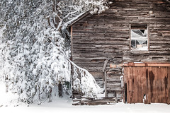 epsom shed (PenelopeEfstop) Tags: barn winter snowstorm shed architecture outdoor texture barnboard snow