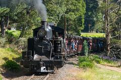 Emerald Eruption (Henrys Railway Gallery) Tags: 14a naclass steam steamtrain steamlocomotive emerald lakeside puffingbilly puffingbillyrailway pbr touristrailway