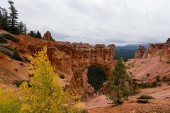Natural Bridge in Bryce (Mauro Grimaldi) Tags: 2016 usa brycecanyon brycecanyonnationalpark honeymoon nationalpark ontheroad park red redrock southwest travel trip usaontheroad2016 utah viaggio west naturalbridge bridge arch arco canyon
