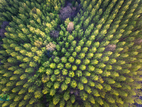Darley Dale Trees Aerial (James G Photography) Tags: uploadedviaflickrqcom darleydale trees aerial drone dji phantom4 derbyshire peakdistrict peaks sunset goldenhour oldfieldlane derbyshiredalesdistrict england unitedkingdom gb
