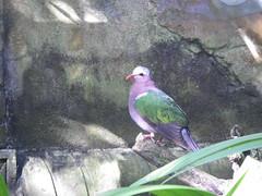 2016-12-28 Animal Kingdom - 94 (s.kosoris) Tags: skosoris pentaxoptiowg1 wg1 pentax animalkingdom disney disneysanimalkingdom florida bird birds
