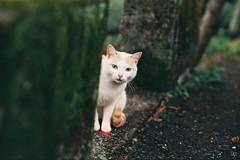 cnv000010 (雅布 重) Tags: nikon f100 nikkor 50mm f14d rossmann100 film cat 2017 taiwan