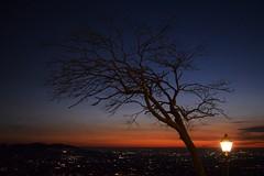the tree of life (Vincenzo Elviretti) Tags: tree albero life vita terrence malick castel san pietro romano lazio italia italy veduta roma dallalto