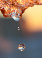 A Drop Drops (peterkelly) Tags: digital northamerica canon 6d southcottpines grandbend ontario canada winter ice melting melt dripping drip drops droplets droplet drop sunset evening dusk yellow lakehuron greatlakes
