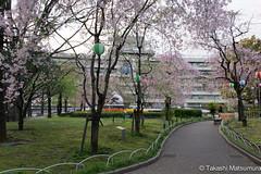 Arakawa Ward Office (takashi_matsumura) Tags: arakawa ward office arakawaku tokyo japan sigma 1750mm f28 ex dc os hsm ngc cherry blossoms spring sakura