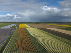 Egmond-Binnen (3) (de kist) Tags: kap thenetherlands nederland egmondbinnen egmond bollenvelden bulbfields bulbs bollen luchtfotografie aerialphotography