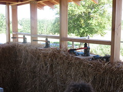 isolation en bottes de paille (britoune41) Tags: écoconstruction paille terre argile solenterre enduitterre bois cadrecanadien maisonenpaille constructionécologique dordogne tadelak isolationnaturelle