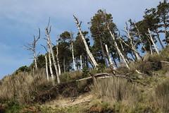 Oceanside, Oregon beach (nikname) Tags: oceansideor oceanside oceansidebeach oceansideorbeach oregonbeaches netartsbay netartsbayor pacificnwbeaches oregoncoast sandybeaches rockybeaches rocks trees