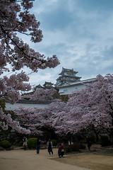 Sakura en fleurs à Himeji (patrick Thiaudiere, thanks for 1 million views) Tags: japon japan voyage cerisier cerisiers cherry sakura fleur fleurs blossom floraison avril