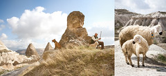 365 Photo : April: FINE ART : Day NINE (Finkeli) Tags: blue sun turkey skies sheep trkiye turkiye traditions lamb 365 turkish shepard cappadocia rockformations greme goreme cappadoce kapadokya uchisar kappadokya kappadokien fairychimneys turco 365project 365photo wwwjuliebalsigercom
