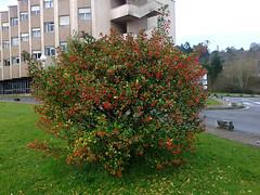 Planta en el Centro Mdico de Oviedo (MANINAS) Tags: planta de centro oviedo principado mdico asturia astirias
