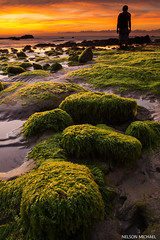Tindakon (Nelson Michael) Tags: sunset nature evening landscapes moss rocks seascapes sony rocky tokina malaysia alpha sabah a77 kudat tindakon