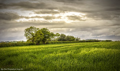 Whispering Grass - The Trees Don't Have To Know (Glyn Owen Photography & Image-Art) Tags: uk trees england grass landscape cheshire landmark kingsley hazy breeze cloudscape springtime hedgerow