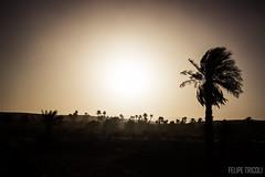 Pôr do sol em Zagora (felipetricoli) Tags: world travel sunset pordosol tourism canon photography cool pretty desert morroco viajando cult viagem marrakech traveling voltaaomundo turismo viagens naestrada ontheroad mundo zagora cultura marroc deserto marrocos t3i aroundtheworld áfrica islã pénaestrada المغرب 600d berberes marraquexe مراكش magrebe