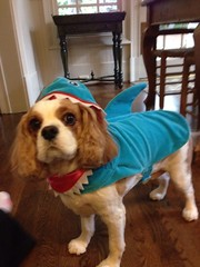 "Dylan the shark • <a style=""font-size:0.8em;"" href=""http://www.flickr.com/photos/72564046@N04/14118142593/"" target=""_blank"">View on Flickr</a>"