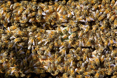 sciamatura (mbeo) Tags: macro texture bee api swarming sciamatura mbeo