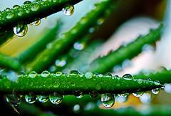 2014-06-01_10-16-03 (J Rutkiewicz) Tags: reflection waterdrops kropelkiwody