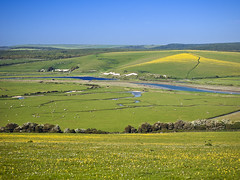 Springtime at Cuckmere Haven, Sussex, England, UK (weesam2010) Tags: park wood uk greatbritain flowers blue trees england sky haven green english grass sunshine yellow daisies rural woodland river downs sussex coast chalk nationalpark spring marine warm view sheep natural bright flood blossom unitedkingdom britain south tide hill shingle shoreline meadow down fresh hills erosion clean clear southern glorious coastal pasture shore valley daisy flowering greenery meander wildflowers elevated riverbank viewpoint plain sevensisters tidal hilly channel grazing southdowns springtime graze oxbow buttercups cuckmere meandering downland