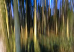 Forest stripes ... (Kat-i) Tags: blue green forest stripes grn blau kati wald streifen wischeffekt wipingeffect nikon1v1