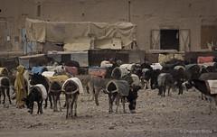 Donkey Souk, Rassani (CharlotteBoyleMedia) Tags: travel animals forsale market northafrica donkeys culture donkey morocco souk trade jellaba exploreeverything rassani