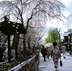 94740004 (Darjeeling_Days) Tags: hasselblad 京都 中判 プロビア