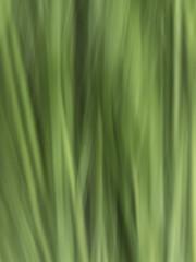 Grass (Master Pedda http://petersamuelsson.se/) Tags: green nature grass mood sweden tranquility serenity icm halland