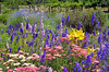 Colorful delphinium and lily garden (Perl Photography) Tags: flowers summer flower green nature floral colors beauty leaves garden botanical petals spring flora colorful lily gardening blossoms foliage lilies vegetation delphinium blooming