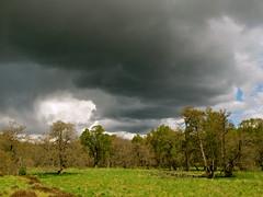 Glen Feshie (Traigh Mhor) Tags: scotland highlands may glen aviemore kingussie 2014 feshie