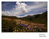 Les flores del camín (Argayu) Tags: cloud mountain flores clouds asturias nubes montaña nuages somiedo asturies camin nubols saliencia ñubes