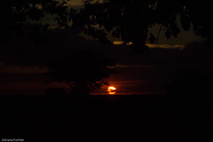 af1407_9831 (Adriana Fchter) Tags: sunset sky panorama cloud mist sol nature fog brasil clouds sunrise de landscape dawn soleil landscapes zonsondergang scenery do tramonto sonnenuntergang nebel view place alba natureza natur coucher natura paisaje paisagem amanecer prdosol nuvens vista dmmerung sunrises neblina paysage landschaft ceu ocaso  niebla por amanhecer paesaggio landschap equador nvoa aube  giorno pr    tocantins     aard dageraad         occidens