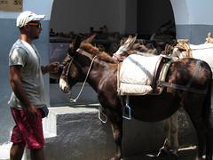 Nice ass (pefkosmad) Tags: vacation holiday man ass profile hellas donkey greece acropolis greekislands griechenland rhodes lindos dodecanese donkeystation pefkosjune2014