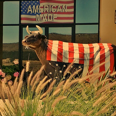 Annual Patriotic Picture For The Fourth of July (Steve Mitchell Gallery) Tags: cow unitedstates flag cellphone flags bull celebrations mobilephone fourthofjuly july4 patriotism independenceday celebrate samsunggalaxynote3