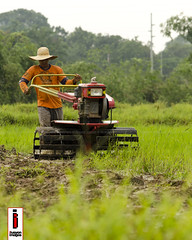 Araro 06 (Soil Cultivation) (ilusyonimages) Tags: street asian photography asia rice farmers farm traditional philippines farming images soil illusion crop filipino ricefields cultivation handtractor ilusyon