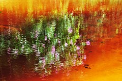 Brazil... immensely wonderful... as your PEOPLE!!! nothing will change IT. (Ruby Ferreira ) Tags: river notreatment bertiogasp reflexosreflection meetingoftherivertothesea praiadeboraciasp flresrefletidas flowersreflectedinwater