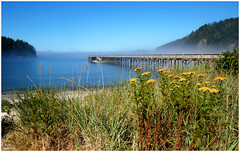 Bowman Bay Dock Wide - Fog and Flowers (ScottElliottSmithson) Tags: ocean statepark flowers mist flower nature water beauty fog canon landscape eos bay washington dock scenery northwest scenic 7d whidbeyisland pacificnorthwest pugetsound wildflowers washingtonstate wildflower deceptionpass yellowflowers tansy skagitcounty stateparks straitsofjuandefuca commontansy rosariobeach deceptionpassstatepark fidalgoisland washingtonstateparks bowmanbay eos7d dtwpuck