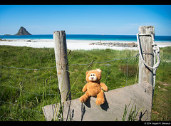Left alone up north (vegarste) Tags: summer cute beach norway strand fence toy norge nikon europe alone teddy norwegen teddybear scandinavia northern left gjerde nordnorge arcticcircle bamse d800 andøya leke bleik teddybjørn etterlatt nordalnd