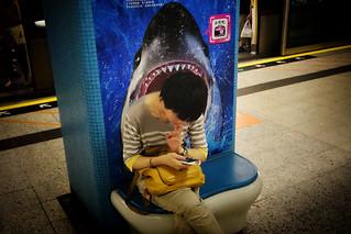 Hong Kong, Shark